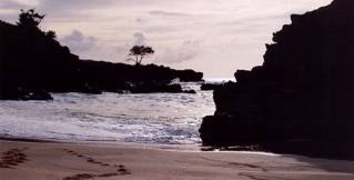 cropped-hawaii.jpg